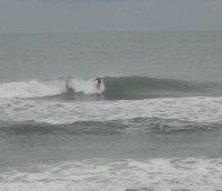 Surfdog60
