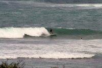 Galapagos Surfer
