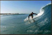 surflez